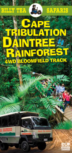 1 Day Daintree, Cape Trib, Bloomfield, 4WD Tour Billy Tea Safaris