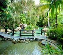 Meandering swimming pools in perfect harmony with nature at Kewarra Beach Resort