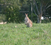 Local Australian Fauna @ Meridien at Trinity