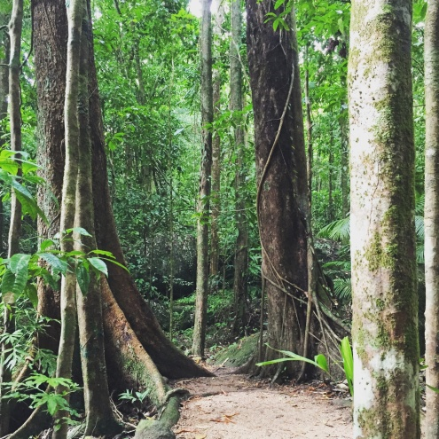 Guided Interpretive Rainforest Walk